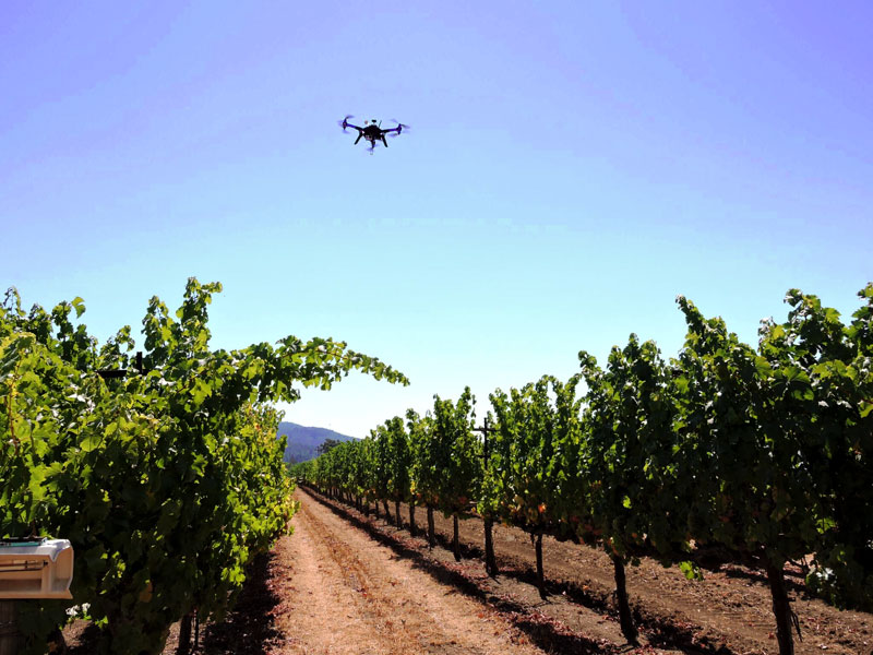A drone surveys a vineyard in California