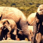 How Drones Save Elephants: John Petersen, Lindbergh FDN