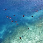 How Drones Help Save Sharks: Michael Scholl & Sonja Betschart