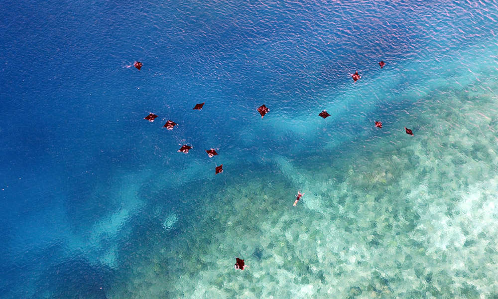 Save Our Seas Uses Drones for Marine Resarch