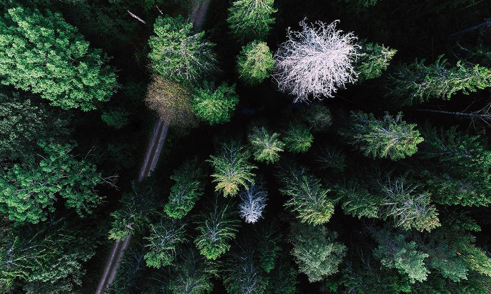 Creating Compelling Aerial Videos: Megan Gaffney & Tyler Mason, AirVuz