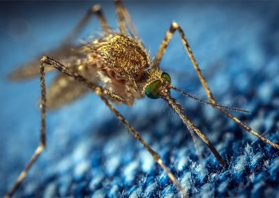 Mosquitoes, Trends and public Safety Use of Drones