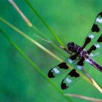 Dragonflies and drones